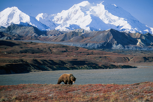 Broome 4wd Hire together with 12 Underappreciated National Parks Youve Never Heard Of also 16 Making Room For Cougars as well Brief History Denali National Park together with 82159 Houston Texans Logo Coloring Page. on national dinosaurs