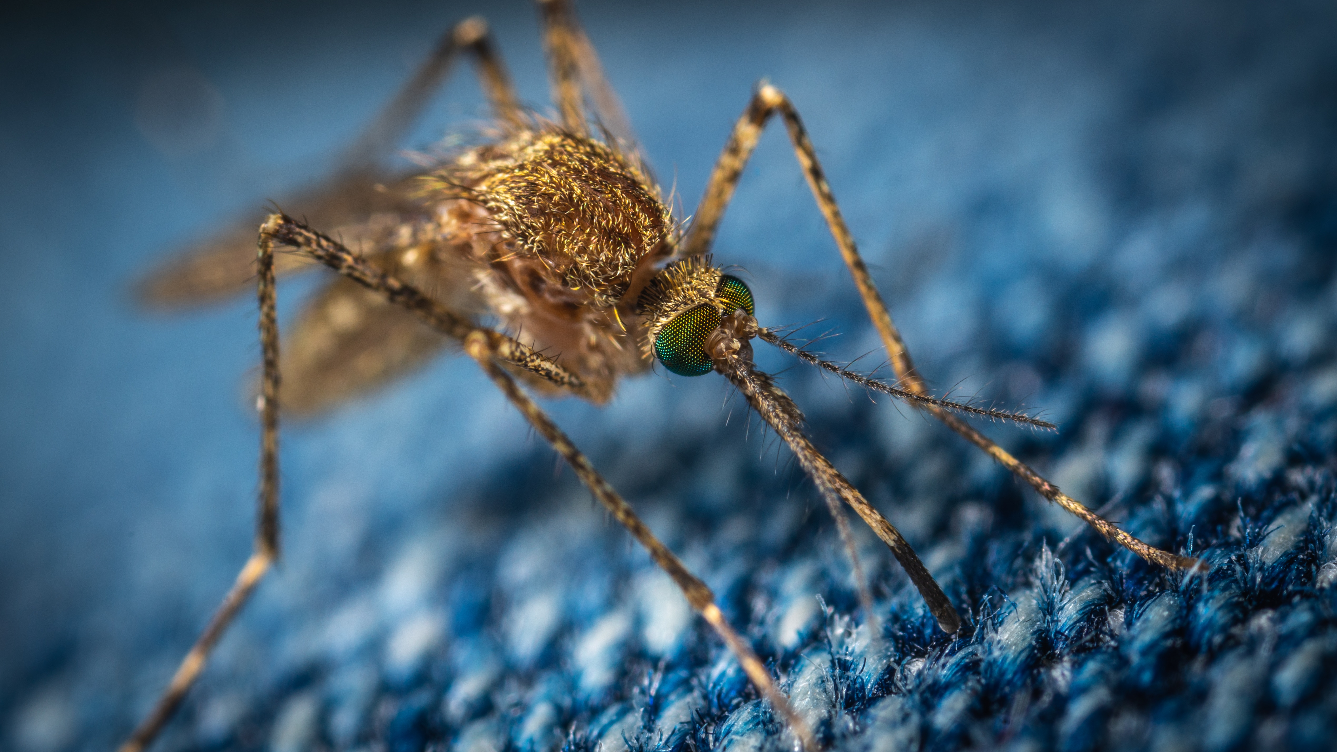 What You Need To Know About Mosquitoes In Alaska Alaska Tour Jobs